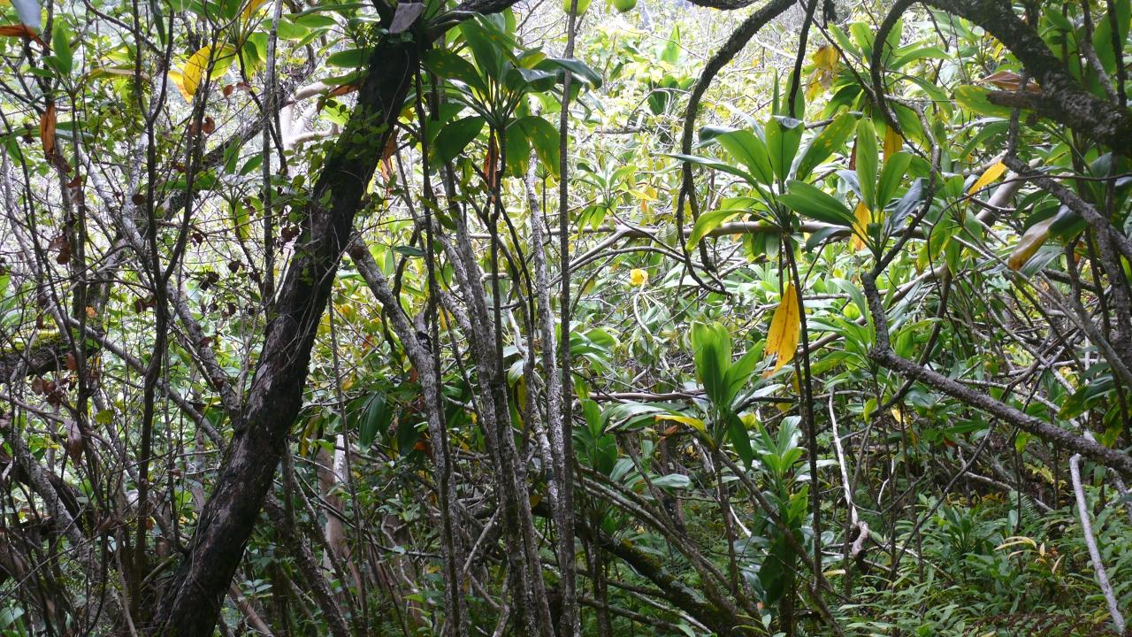 Nachhaltige Anlagen boomen – werden aber sehr unterschiedlich definiert